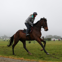 Douvan gets reacquainted with Cheltenham on Monday morning