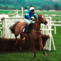 Granville Again, ridden by Peter Scudamore, jumps the last on his way to winning the Champion Hurdle