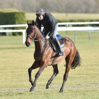 Getabird stretches his legs at Cheltenham